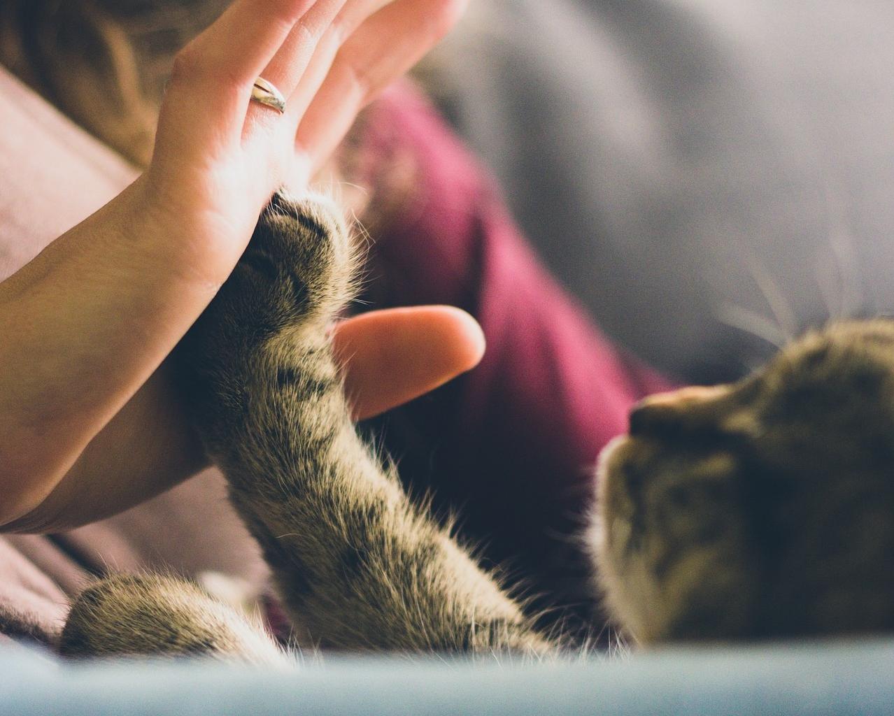 """Initiation à la communication animale """"en ligne"""" 08.03.2021"""